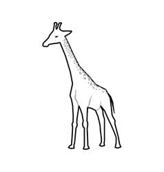 giraffe african animal vector image