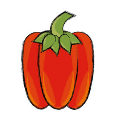 pepper vegetable natural vector image