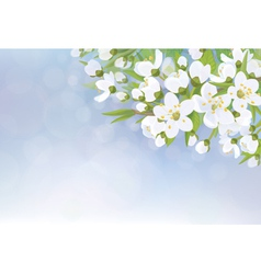 Flowers tree spring vector