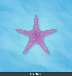Strafish copy vector image