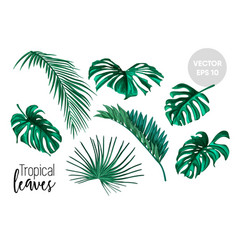 Tropical leaves monstera palm set vector