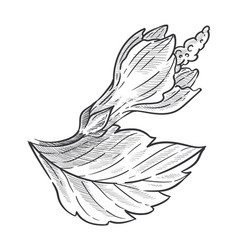 Wild flower hibiscus plant isolated sketch fauna vector