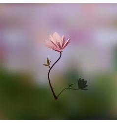Blossom brunch of pink magnolia vector image