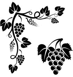 Bunch vine vector