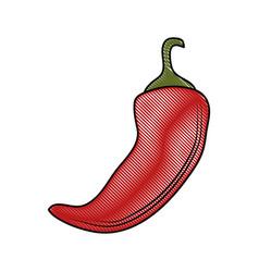 Chilli hot vegetable vector