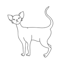 Cornish rex icon in outline style isolated on vector