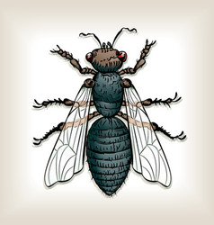 house fly vector image