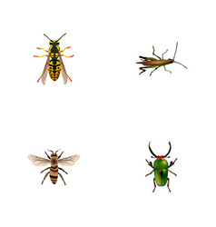 Realistic locust bee wasp and other vector