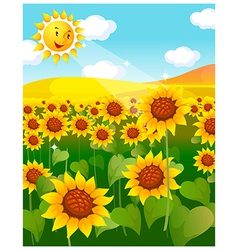 Sunflower field and sun vector