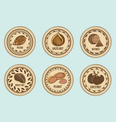 colorful fresh nuts round labels set vector image vector image