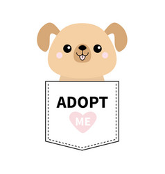 adopt me dont buy dog in the pocket pet vector image