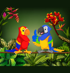 beautiful parrots are talking on the stalk vector image