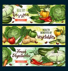 organic vegetables healthy vegetarian food vector image