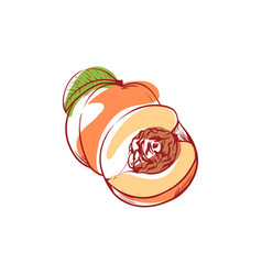 Ripe peach isolated icon vector