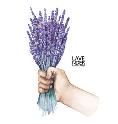 Watercolor hand with lavender bouquet vector