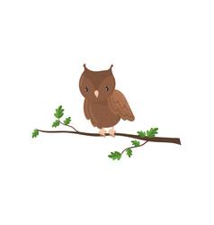 cute owl woodland cartoon bird vector image
