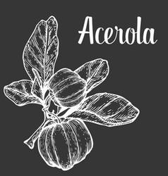 Acerola Plant vector