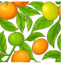 Mandarin pattern on white background vector