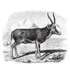 Saiga antelope vintage vector