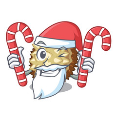 Santa with candy fruit marang is located in mascot vector