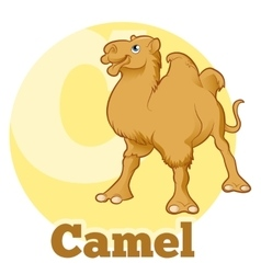 ABC Cartoon Camel vector image