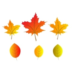 autumn tree leaves vector image