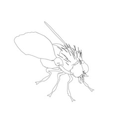 contour of the fly isometric view vector image