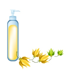 Essential oil and yellow ylang ylang flowers vector