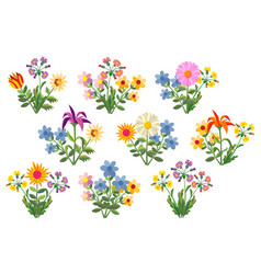 Flower bouquets multi-colored summer flowers vector