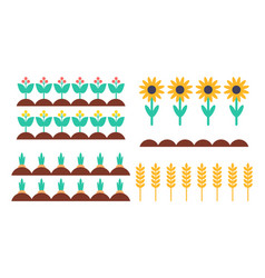 Garden bed of bush sunflower and spica set vector
