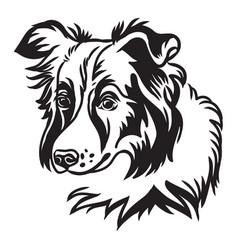 image border collie dog on white background vector image