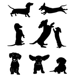 Silhouettes of dachshunds vector