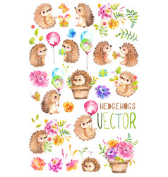 Watercolor hedgehogs babies watercolor little vector
