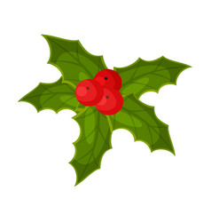 holly berry mistletoe plant christmas and new vector image