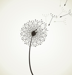 Flower a dandelion4 vector image