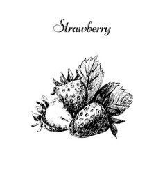 ink hand drawn vintage strawberry vintage fruit vector image