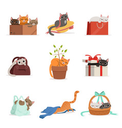 Cute differents cats having rest in their favorite vector