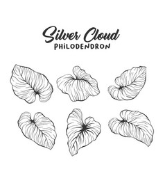 palm leaves realistic outline drawing vector image