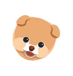pomeranian spitz puppy close up portrait isolated vector image