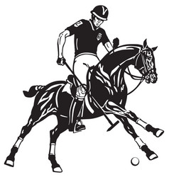 polo player on black horse vector image