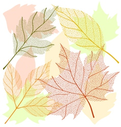 Autumn leaf set vector image