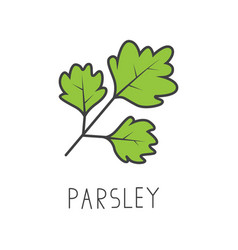 Parsley line cooking isolated vector