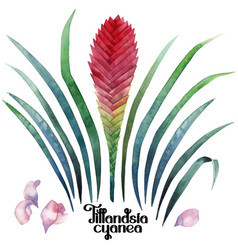 Watercolor tillandsia cyanea collection vector