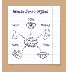 Five senses sketch on notebook page vector image