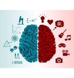 Brain infographics vector