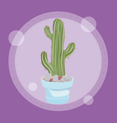 cactus in pot design vector image