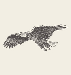flying eagle hand drawn sketch vector image