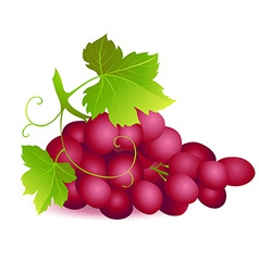 Icon of Ripe summer grape with two green leaves vector image