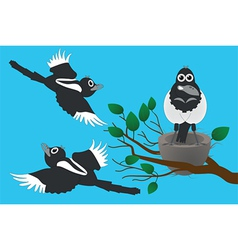 magpies vector image