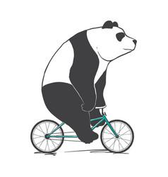 Panda rides on bicycle vector